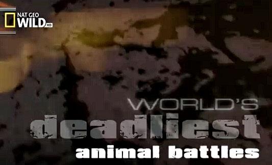 اشرس معارك الحيوانات